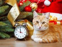 wating在圣诞节时间的猫 免版税库存照片