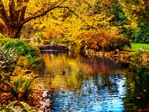 Watrestream during autumn season  in the public Beacon Hill Park Stock Photography