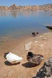 Watson湖,普里斯科特, AZ 免版税图库摄影