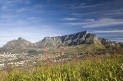 Watsonias de florescência com a cidade de Cape Town e da montanha da tabela Fotos de Stock