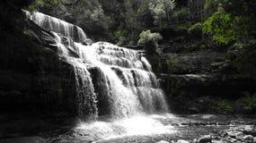 Watterfall in de Tasmaanse struik Stock Fotografie