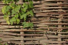Wattle φράκτης Στοκ εικόνα με δικαίωμα ελεύθερης χρήσης