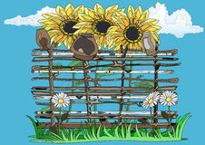 Wattle fence, sunflowers and camomiles Stock Images