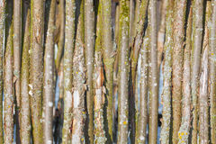 Wattle fence wood background Stock Photo