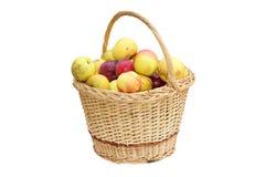 Wattle handmade basket with apples Stock Image