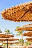 Wattled在晴朗的夏天海滩的秸杆伞 埃及 Sharm els 免版税库存照片