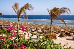 wattled秸杆伞行在热带海滩的 免版税库存照片