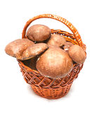 Wattled basket with ceps Royalty Free Stock Image