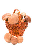 Wattled basket with ceps Royalty Free Stock Photos