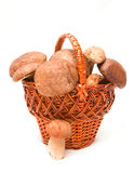 Wattled basket with ceps Royalty Free Stock Images