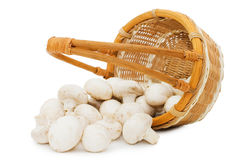 Wattled basket with field mushrooms isolated Stock Photography