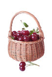 Wattled basket filled with ripe cherries Royalty Free Stock Images