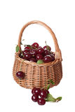 Wattled basket filled with ripe cherries Stock Images