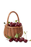 Wattled basket filled with ripe cherries Royalty Free Stock Photos