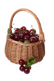 Wattled basket filled with ripe cherries Stock Image