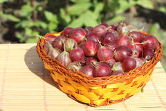 Wattled basket with a gooseberry Stock Photos