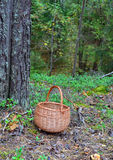 Wattled basket for mushrooms Stock Photography