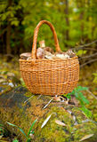 Wattled basket with mushrooms Stock Images