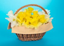 Wattled basket with narcissuses Royalty Free Stock Photography