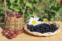 Wattled platta med en svart vinbär och korg med ett krusbär Royaltyfria Bilder