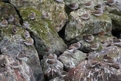 Watvögel auf Felsen Lizenzfreies Stockfoto