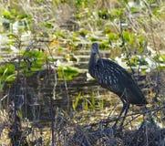 Watvögel, die in den Schatten sich verstecken Stockbild