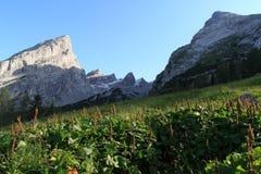 Watzmann - meadow Royalty Free Stock Images