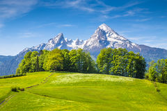 Watzmann mountain with green meadows in spring, Bavaria, Germany Stock Photo