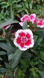 Wauw bloemen stock foto's