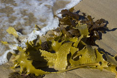 Wave approaching beach seaweed Stock Images