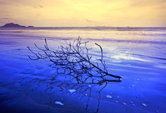 Wave approaching the dead branch Stock Photography