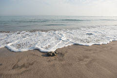 Wave approaching pebble on the beach sand. Frothy wave approaching pebble on the beach sand Stock Photos