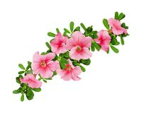 Wave arrangement of petunia flowers and leaves. Isolated on white Royalty Free Stock Photo