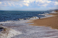 Wave on the beach. The shore of the sea. Seagull on the beach. Clouds on blue sky stock images