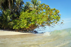 Wave on beach with tropical vegetation Stock Photography