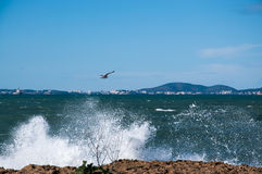 Wave and bird. Wave and bird in front of Palma de Mallorca Royalty Free Stock Photography