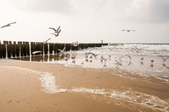 Wave Breaker and seagulls Royalty Free Stock Image