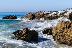 Wave breaking on rocks with seal and marine birds; water dripping from rocks, blue green sea in background. Wave breaking on rocky coastline as it surges towards Stock Photo