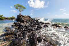 Wave breaks over prehistoric ruined wave breaker with a lonely tree. Nan Madol. Lagoon of Pohnpei, Micronesia, Oceania. royalty free stock photos