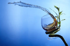 Wave of cognac pours out of glass Stock Images