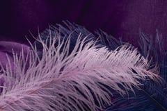 Wave di struttura viola elegante del tessuto con la f rosa e blu fine Fotografia Stock