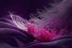 Wave di struttura viola elegante del tessuto con le piume rosa fini Immagine Stock