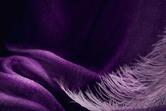 Wave of elegant violet textile texture with fine pink feather. Beautiful, delicate and gentle background Stock Image