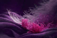 Wave of elegant violet textile texture with fine pink feathers. Beautiful, delicate and gentle background Stock Image