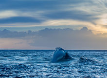 Wave forms plume off Ke'e Beach in Kauai Stock Image