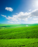 Wave hill covered by green meadow Stock Photography