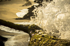 Wave hit tree Royalty Free Stock Images