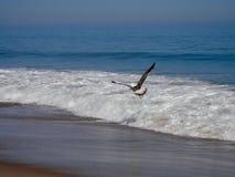 Wave Jumper stock image