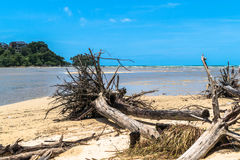 Wave kill pine trees at Long beach locate Niyang beach Stock Photo