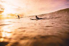 Wave in ocean at sunset or sunrise with surfers. Water sport in ocean. Wave in ocean at sunset or sunrise with surfers. Water sport Stock Photography